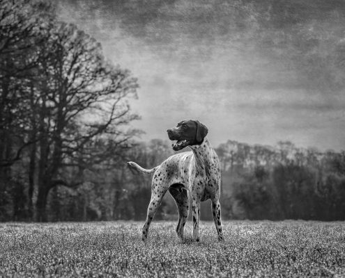 Pet_Portrait_Photography_Newbury_Berkshire_Dog