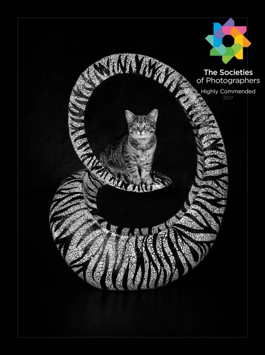 Award-winning_pet_animal_cat_portrait_photography_newbury_berkshire