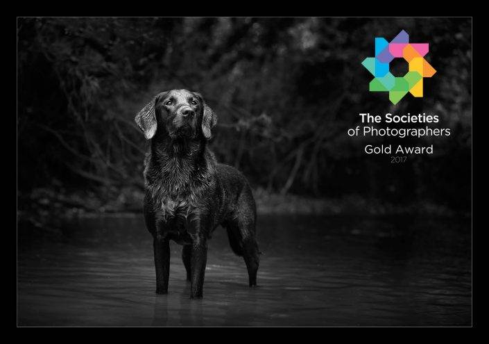 Award-winning_pet_animal_dog_portrait_photography_newbury_berkshire