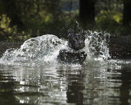 Dog_Photography_Portrait_Newbury_Berkshire