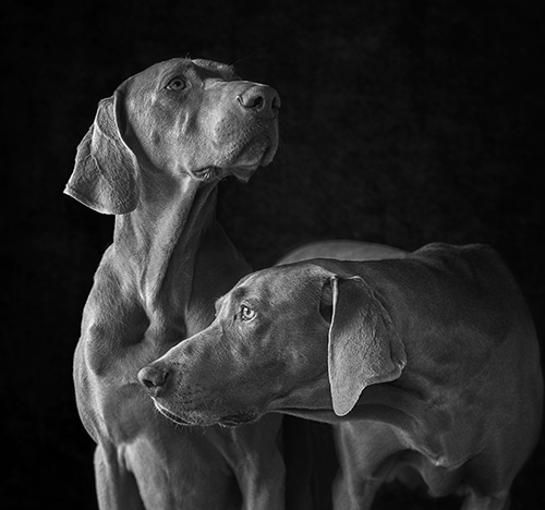 Dog_Portrait_Photography_Newbury_Berkshire