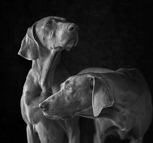 Dog_Portrait_Photography_Newbury_Berkshire