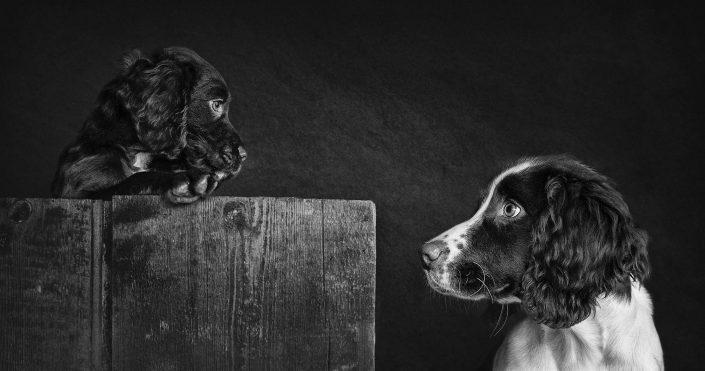 dog_Pet_Photography_Newbury_Berkshire_Hampshire