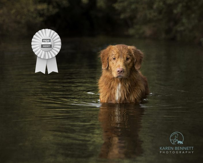 Dog_Photography_Pets_Newbury_Berkshire