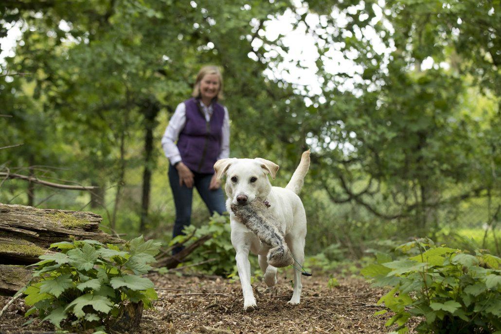Dog_Photography_Gundog_Newbury_Berkshire