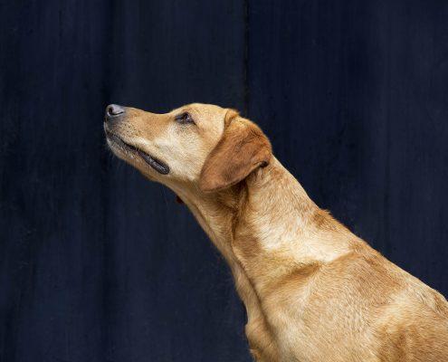 Dog_Portrait_Photography_Pet_Newbury_Berkshire