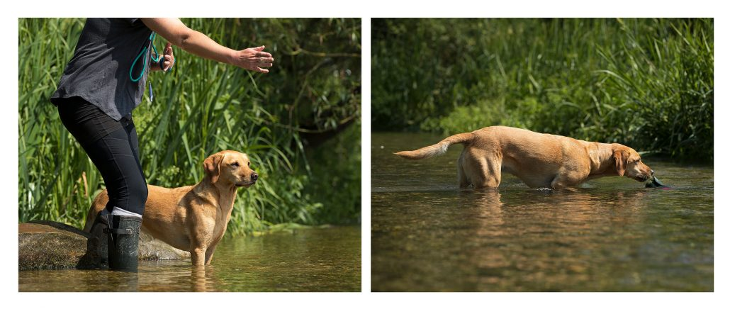 Dog_Photography_Gundog_Pets_Newbury_Berkshire