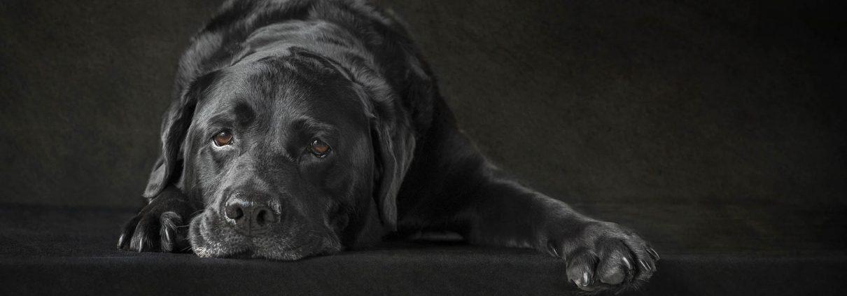 Pet_Photography_dog_newbury_Berkshire