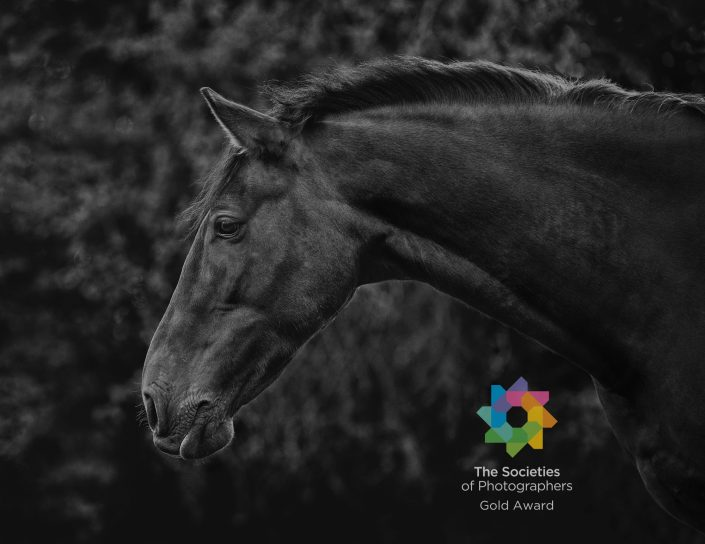 Equine_horse_Portrait_photography_Newbury_Berkshire