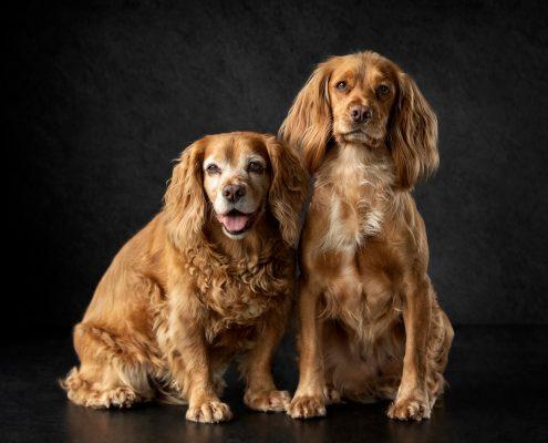 Pet_Portrait_Photography_Newbury_Berkshire_Dog