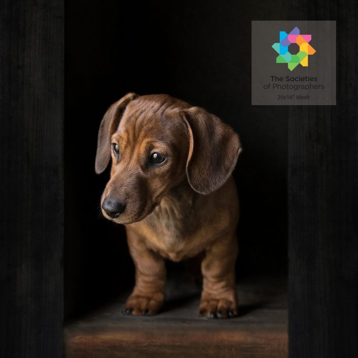 Pet_Photography_dog_newbury_Berkshire