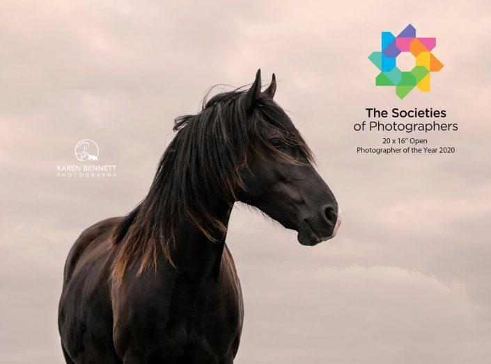 equine_photography_Horse_Newbury_Reading_Berkshire