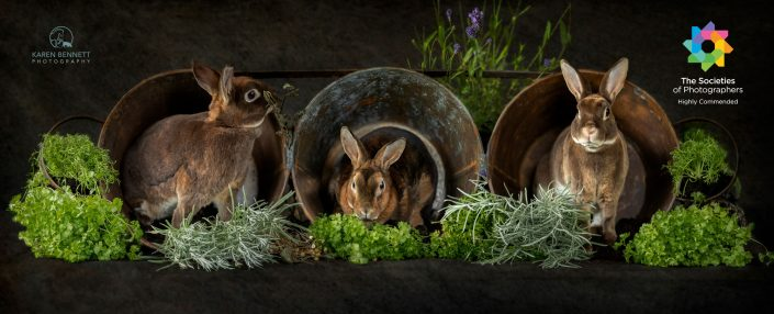 Pet_Photography_rabbit_newbury_Berkshire